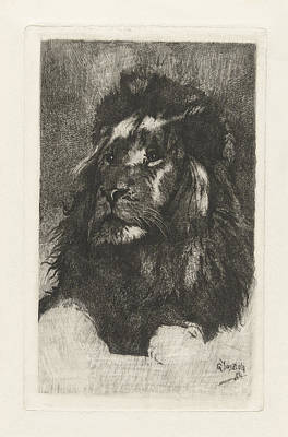 Bo Drawing - Head Of A Lion, Gerard Jan Bos by Quint Lox