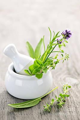 Pharmaceutical Photograph - Healing Herbs by Elena Elisseeva