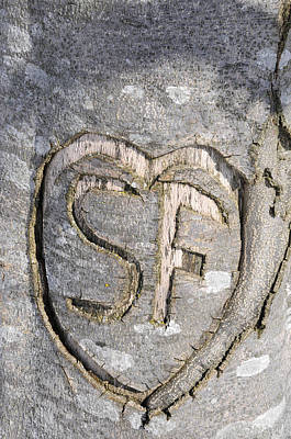 Heart Photograph - Heart Carved In Bark Of Tree With Initials S And F by Matthias Hauser