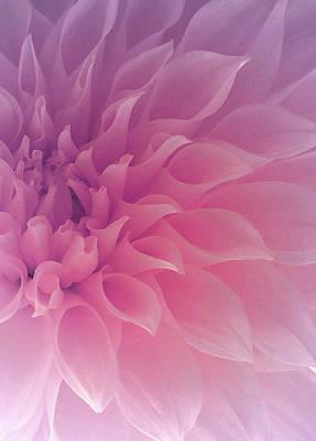 Delicately Photograph - Heart Of A Dahlia by  The Art Of Marilyn Ridoutt-Greene