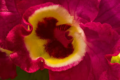 Heart Of An Orchid Print by Lindley Johnson