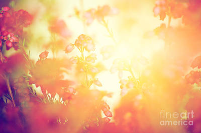 Autumn Photograph - Heather Flowers On A Fall Autumn Meadow In Shining Settng Sun That Gives Warm Mood by Michal Bednarek