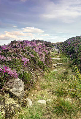 Dunstanburgh Photograph - Heather On Simonside Hills by Chris Frost