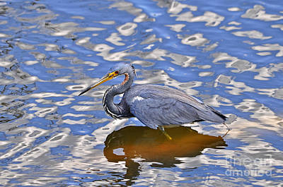 Heavenly Heron Print by Al Powell Photography USA