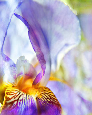 Heavenly Iris Print by Theresa Tahara