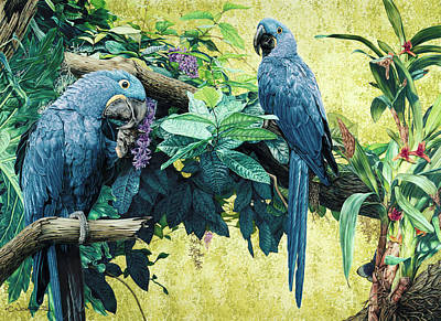 Macaw Mixed Media - Heavenly - Print by Carole Niclasse