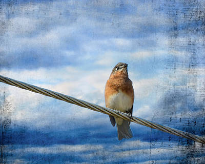 Heavenly Song Of The Bluebird Print by Jai Johnson