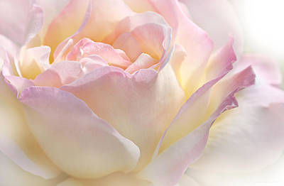 Heaven's Pink Rose Flower Print by Jennie Marie Schell