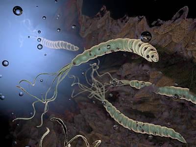 Helicobacter Pylori Bacteria Print by Hipersynteza