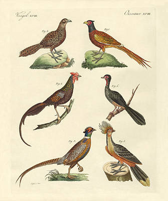 Pheasant Drawing - Hen-like Birds by Splendid Art Prints