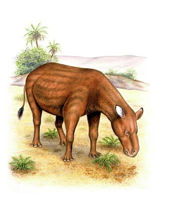 Paleozoology Photograph - Heptodon Prehistoric Mammal by Deagostini/uig