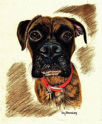 Boxer Dog Art Drawing - Her Name Is Bonnie by Joy Bradley