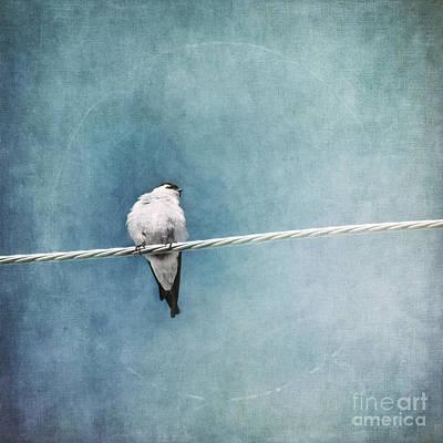 Tree Swallow Photograph - Herald Of Spring by Priska Wettstein