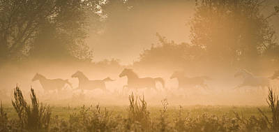 Herd In Light Print by Andy-Kim Moeller