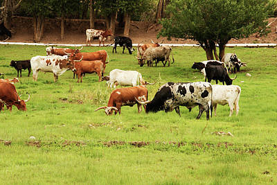 Longhorn Photograph - Herd Of Texas Longhorn Cattle In Green by Piperanne Worcester