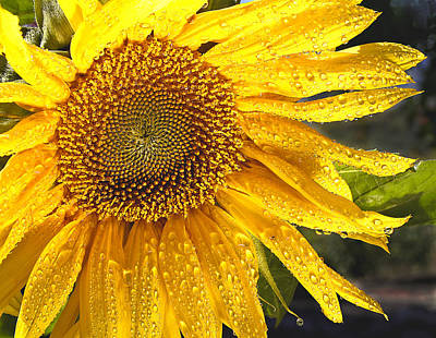 State Flowers Photograph - Here Comes The Sun by Jean Noren