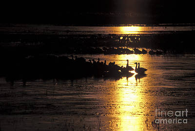 Geese Photograph - Here Comes The Sun by Steven Ralser