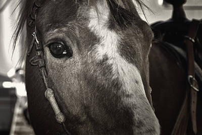 Horse Portrait Photograph - Heres Looking At You by Joan Carroll
