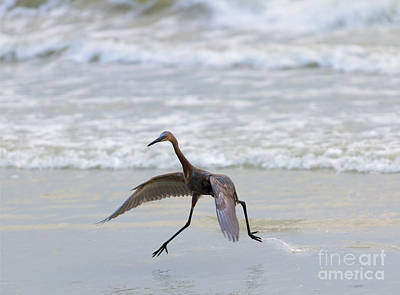 Wading Bird Photograph - Heron Ballet by Mike  Dawson