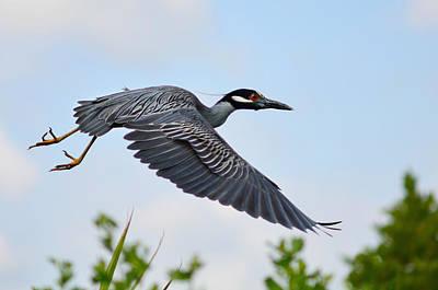 Birds In Flight Photograph - Heron Flight by Laura Fasulo