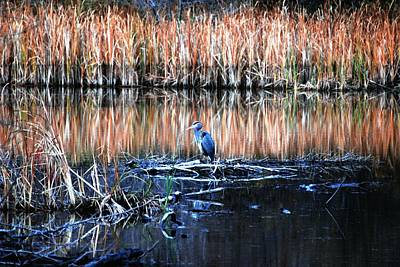Nature Photograph - Heron In The Marsh by Don Mann