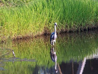 Nature Ers Photograph - Heron In The Pond  by Kate Scott
