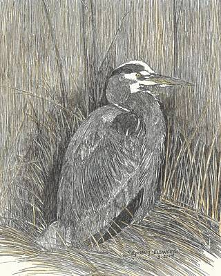 Drawing - Heron On Assateague Island by Stephany Elsworth