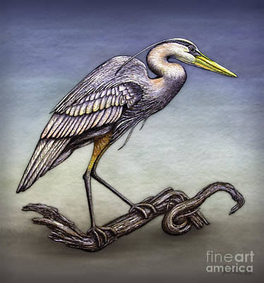 Heron On Driftwood Print by Walt Foegelle