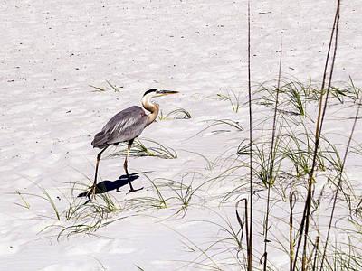 Heron Photograph - Heron On The White Sand by Zina Stromberg