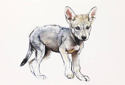 Hesitating Arabian Wolf Pup Print by Mark Adlington