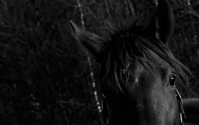 Photograph - Hi by Edward Kay