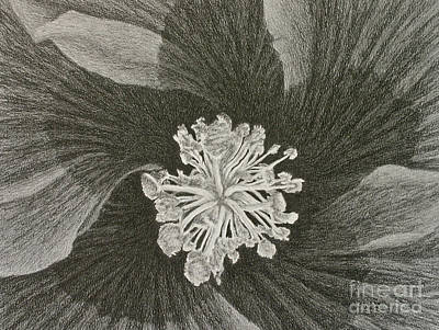 Hibiscus  Print by Chad Keith