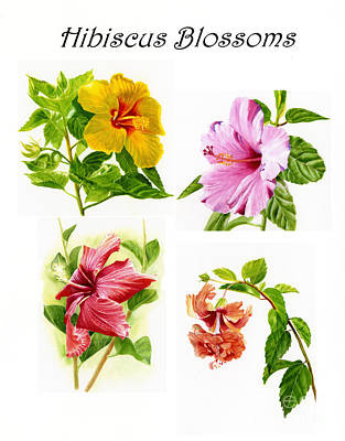 Peaches Painting - Hibiscus Poster With Script by Sharon Freeman