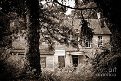Old Home Place Photograph - Hidden Behind The Pines by Colleen Kammerer