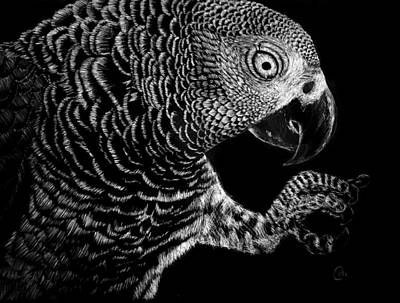 Cockatoo Drawing - Hidden In The Canopy by Nathan Cole