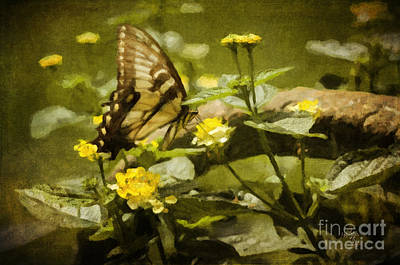 Swallow Digital Art - Hidden Treasure by Lois Bryan