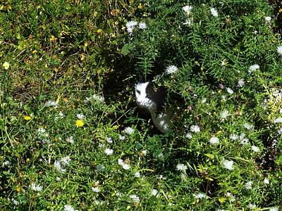 Cats Whiskers Bloom Photograph - Hide And Seek by David and Mandy