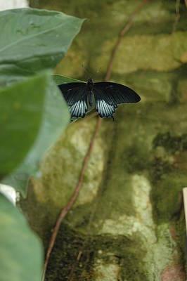 Butterfly Photograph - Hide And Seek by Nina Kurtz