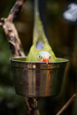 Parakeet Digital Art - Hide And Seek Princess Parrot by Eti Reid