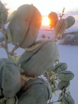 Nature Photograph - Hiding Sun by Mike Podhorzer