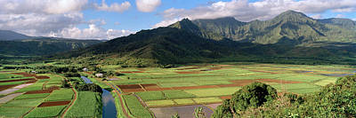 Hanalei Photograph - High Angle View Of A Field by Panoramic Images