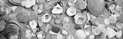 Large Group Of Objects Photograph - High Angle View Of Seashells by Panoramic Images