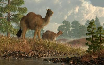 High Arctic Camel Print by Daniel Eskridge