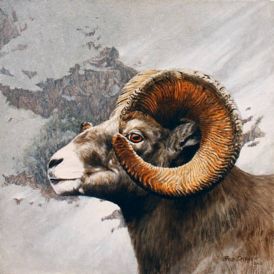 Big Horn Sheep Painting - High Country Bighorn by Rob Dreyer AFC