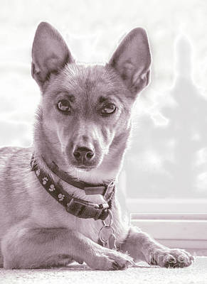 Dog Pics Photograph - High Key Barney by Linsey Williams