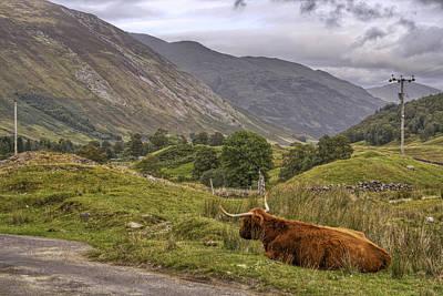 Highland Cow In Scotland Print by Jason Politte