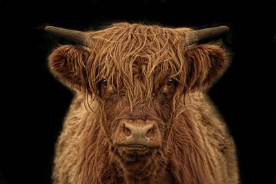 Sec Photograph - Highlander by Joachim G Pinkawa