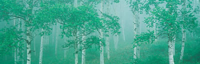 Highlands Yachihokgen Nagano Japan Print by Panoramic Images