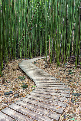 Hiking Through The Bamboo Forest Print by Pierre Leclerc Photography