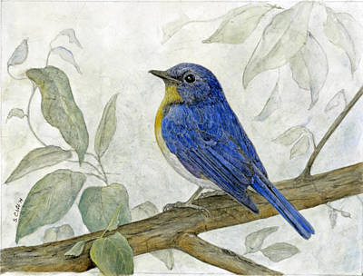 Hill Blue Flycatcher Original by Sandy Clift